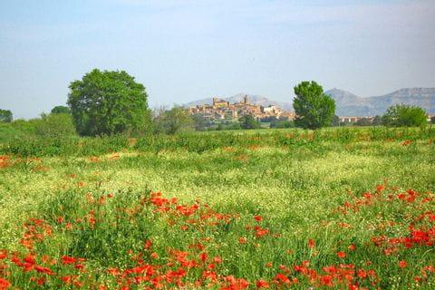 Wiese mit Mohnblumen, im Hintergrund Stadtbild