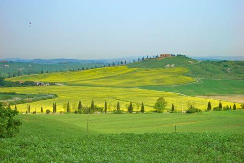 Toskanische Landschaft mit gelben Blumen