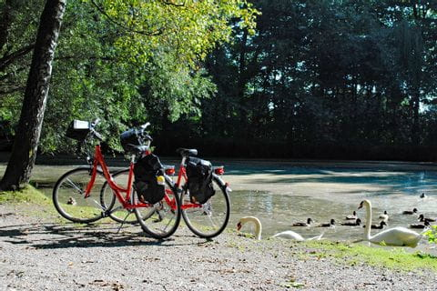 Bikes at the bank of a pond