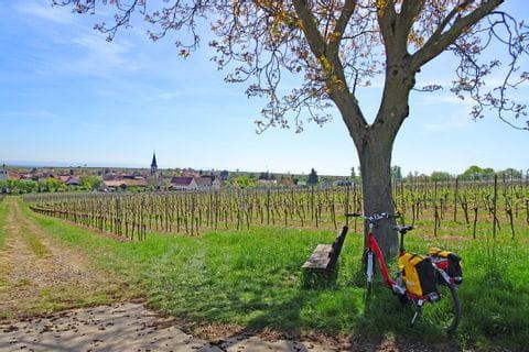 Cycle break in the vineyards